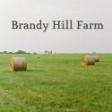 bhf-logo-farm