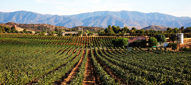 Reyes Winery - Agua Dulce CA - Rustic Wedding Guide