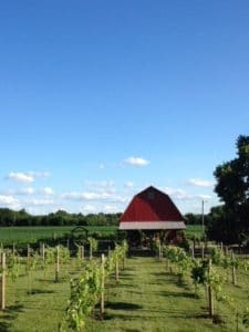 Vineyard at Porter Central - Sunbury OH - Rustic Wedding Guide