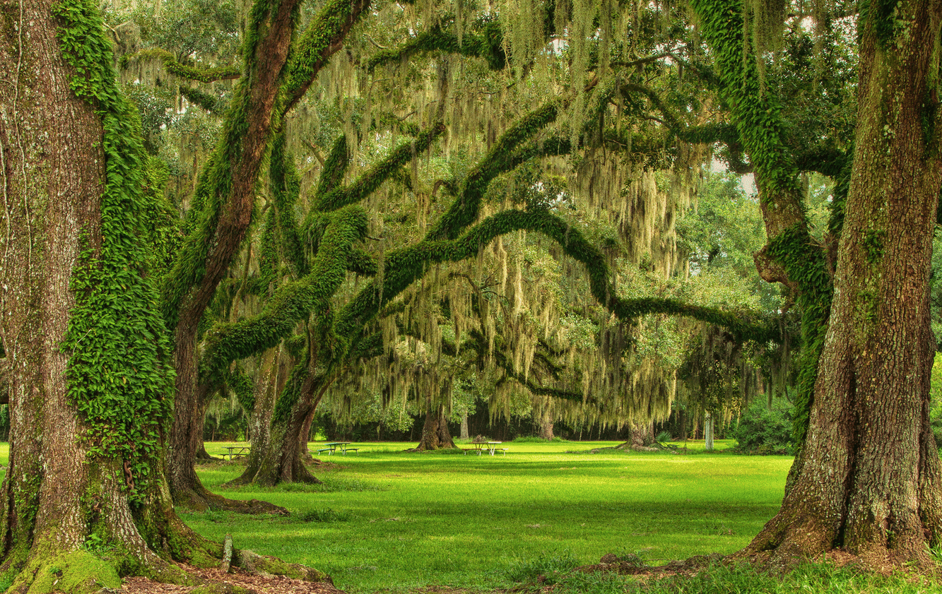 jungle gardens - avery island la