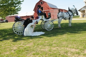 The Farmstead Liberty Center Oh Rustic Wedding Guide